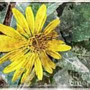 Yellow Wildflower Photoart Poster