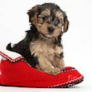 Yorkipoo Pup Poster