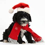 Yorkipoo Pup Wearing Christmas Hat Poster