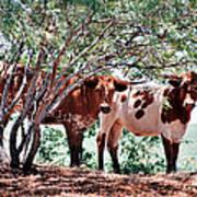 Young Bulls Poster