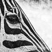 You've Got Zebra Eyes Poster
