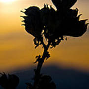 Yucca At Sunset Poster