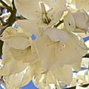 Yucca Flowers 3 Poster
