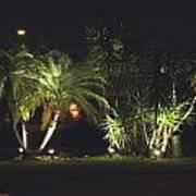 Yucca Spot Lighting Teakwood Island Poster