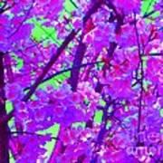 Zen Blossoms Poster