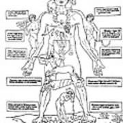Zodiac Man, Medical Astrology Poster