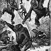 Zoology: Primates, 1883 Poster