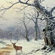 A Stag In A Wooded Landscape  Poster