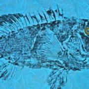 Black Sea Bass - Rockfish - Grouper Poster