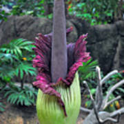 Corpse Flower Poster