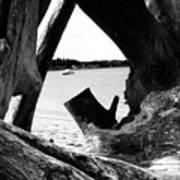 Drift Wood Window Poster