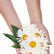 Giant Daisies For The Cosmetic  Industry Poster