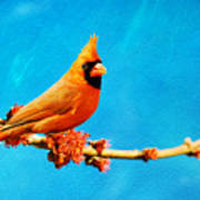 Male Northern Cardinal Perched On Tree Branch Poster