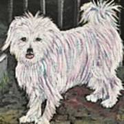 Maltese Terrier Mix In Living Color Poster