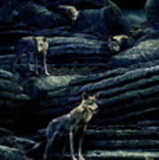 Moonlit Wolf Pack Poster