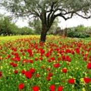 Olive Amongst Poppies Poster