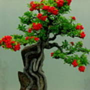 Red Berried Bonsai Poster