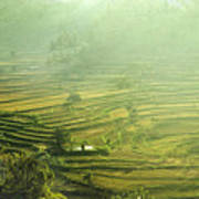 Rice Terrace  Poster