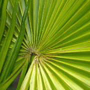 Spiny Fiber Palm Poster