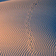 Tracks At First Light In Death Valley Poster