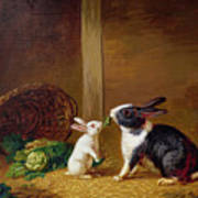 Two Rabbits Poster by H Baert