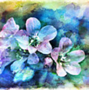 Wildflowers 5  -  Polemonium Reptans - Digital Paint 4 Poster