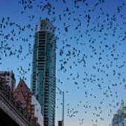 1.5 Million Mexican Free-tail Bats Overtake The Austin Skyline As They Exit The Congress Avenue Bridge Poster