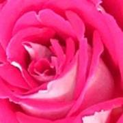 Bara Means Rose Poster