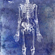 1911 Anatomical Skeleton Patent Blue Poster