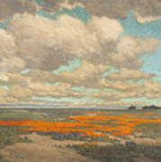 A Field Of California Poppies Poster