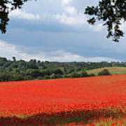 A Field Of Red Poppies Poster