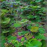 A Pretty Pond Full Of Lily Pads At A Water Temple In Bali. Poster