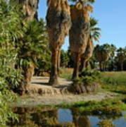 Agua Caliente Park Poster