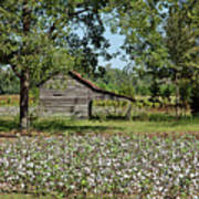 Alabama Cotton Field Poster