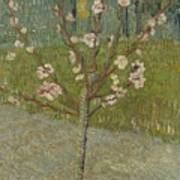 Almond Tree In Blossom Arles, April 1888 Vincent Van Gogh 1853 - 1890 Poster