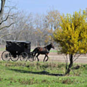 Amish Buggy Late Fall Poster
