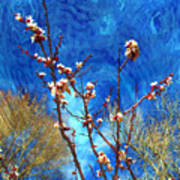 Apricot Blossoms El Valle Poster