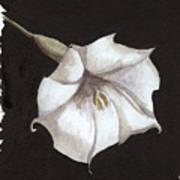 Arlene Poster