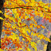 Autumn Beech Leaves Poster