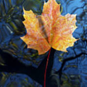 Autumn Leaf On The Water Poster
