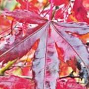 Autumn Red Poster