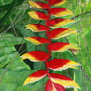 Balinese Heliconia Rostrata Poster