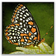 Baltimore Checkerspot Poster