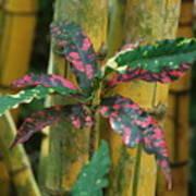 Bamboo Flower Poster