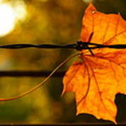 Barbed Autumn Poster