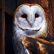 Barn Owl  Poster by Anthony Jones