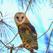 Barn Owl Beauty Poster