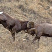 Battering Rams Poster