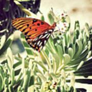 Beach Butterfly Poster
