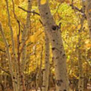 Beautiful Fall Color In California Poster